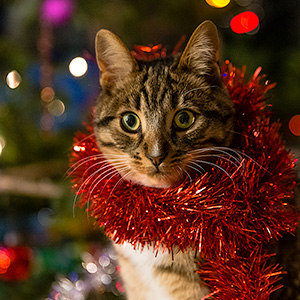 photo of a cat with a Christmas garland around its neck