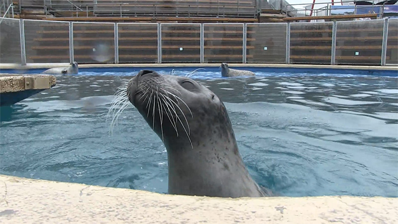 picture of the head of a seal in a pool