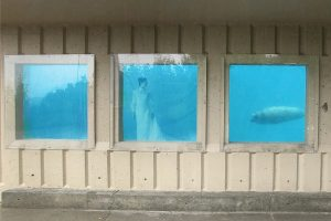 screenshot of a video showing windows of an aquarium with a seal and a woman underwater